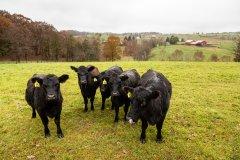 绿色和平调查:欧盟总预算1/5 千亿元补贴入畜牧业者口