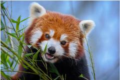 世界屋脊难逃生物多样性丧失厄运