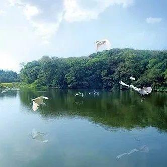 全球变绿的中国贡献――代表委员眼中的中国生态文明建