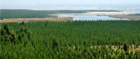 我国人工林面积世界第一 国家公园要实现生态美百姓富