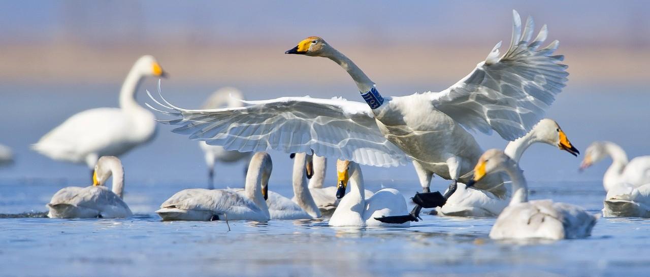 国家林草局:规范观鸟活动 树立文明观鸟、拍鸟理念