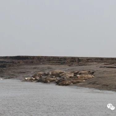 """第三个""""中华斑海豹保护地""""于营口成"""