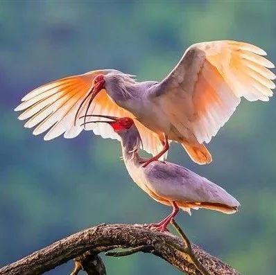 四川鸟类最新数据:共725种 居全国第