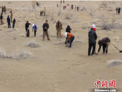 新疆兵团开展春季植树造林 2018年造林