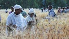 众包种植模式如何帮助农民适应气候变化