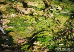 土壤污染治理与修复