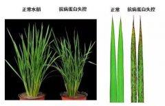 中国科学家的这一重大发现,有望彻底减