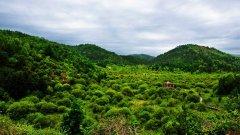 西安通报3起生态环境保护领域案例