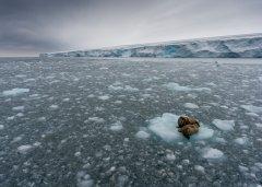 北极冰层融化导致碳释放 可能加剧气候变暖