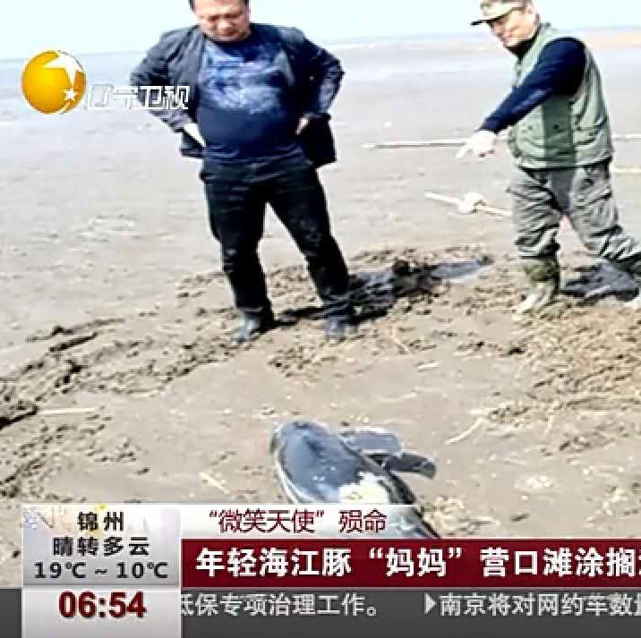 """守护世界濒危物种江豚  """"中华江豚保"""