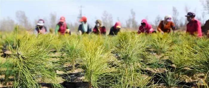 陕西榆林:春日沙漠植树忙