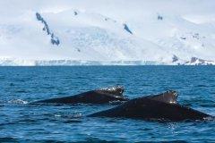 南冰洋保护区捕完最后一波 日本7月起