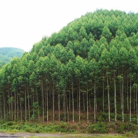 """黄如楚:""""每棵树都跟我的孩子一样"""""""