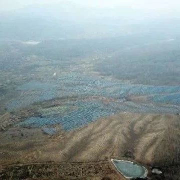 """密林开""""天窗"""",黑龙江6000亩林地疑被毁林种人参"""