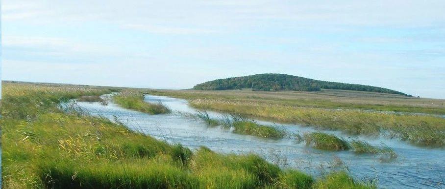 多环芳烃(菲)添加对珠江河口农村和城市河流湿地土壤