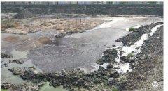 江苏如皋:粪污横流的奶牛场终于搬走了