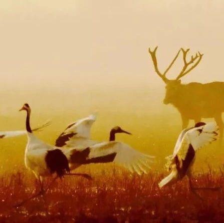 绿会拟设凤凰基金,助力国鸟保护和生态环境综合发展