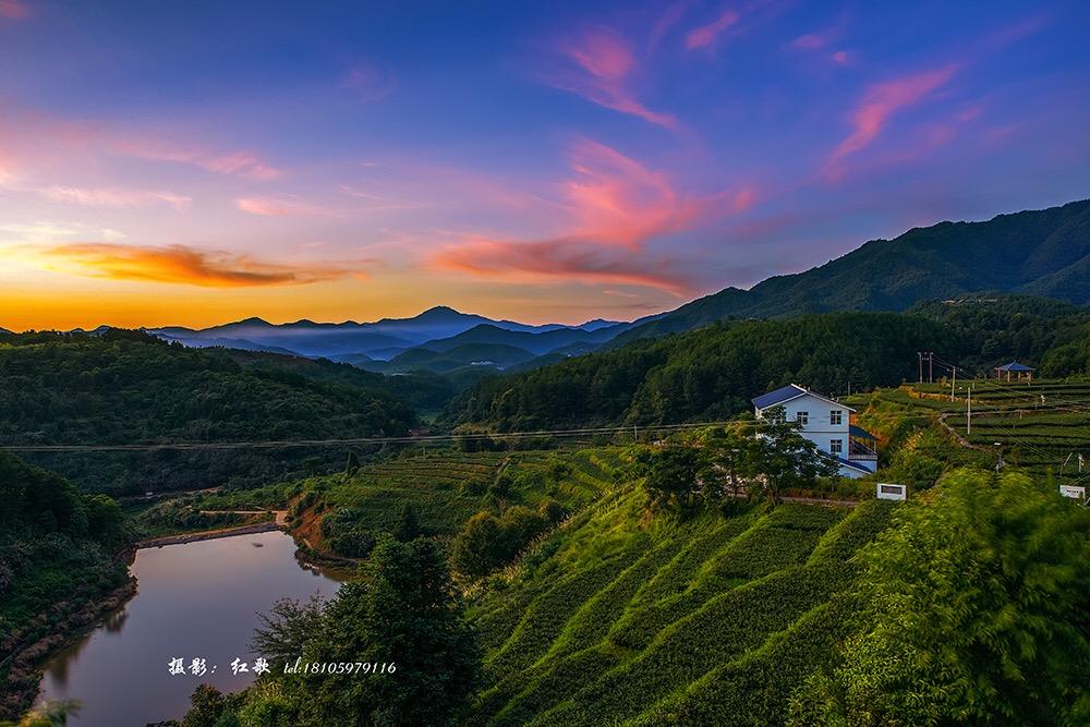 儒溪茶业:基地美景