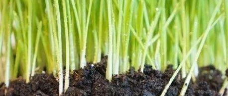 论土壤修复行业市场规模