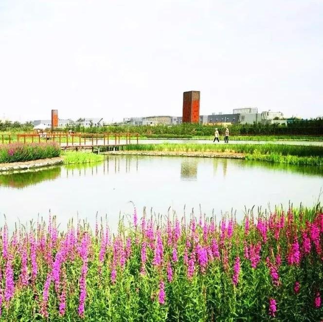 北京槐房再生水厂获评水情教育基地