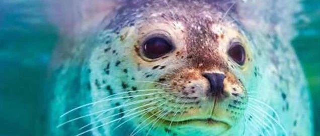 《海洋污染物指南:人类健康和海洋生物面临的毒害威胁
