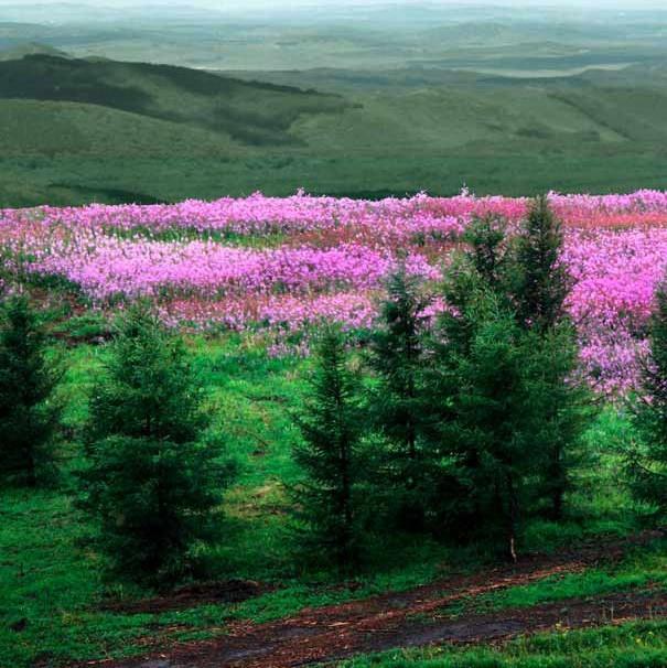 河北围场创新林业扶贫模式�D�D绿水青山就是金山银山