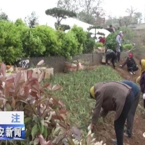 邯郸武安市生态修复治理让废弃矿山披