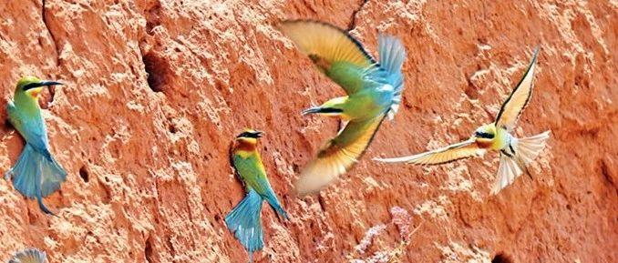 护飞行动――带动各方参与,候鸟繁殖地落实多效保护措