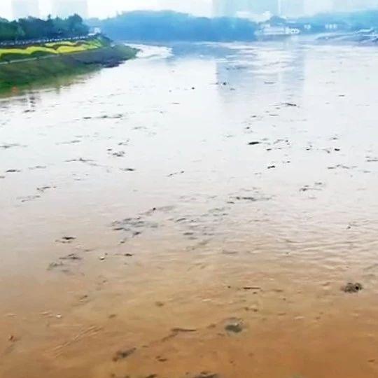 暴雨致浏阳河河水剧涨,河面漂浮大量各类垃圾