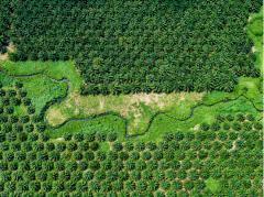 圆桌讨论:如何解决全球生物多样性丧