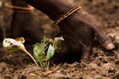 联合国粮农组织呼吁拯救土壤:寻找阻止侵蚀的方法