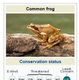 致命疾病感染欧洲青蛙,气候变化下两栖动物生存未来堪
