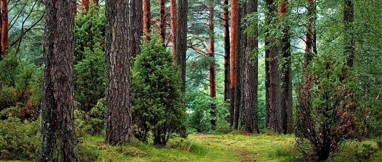 森林是地球上最宝贵的财富之一