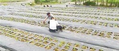 """常德全国土壤污染综合防治先行区""""治土模式""""探索"""
