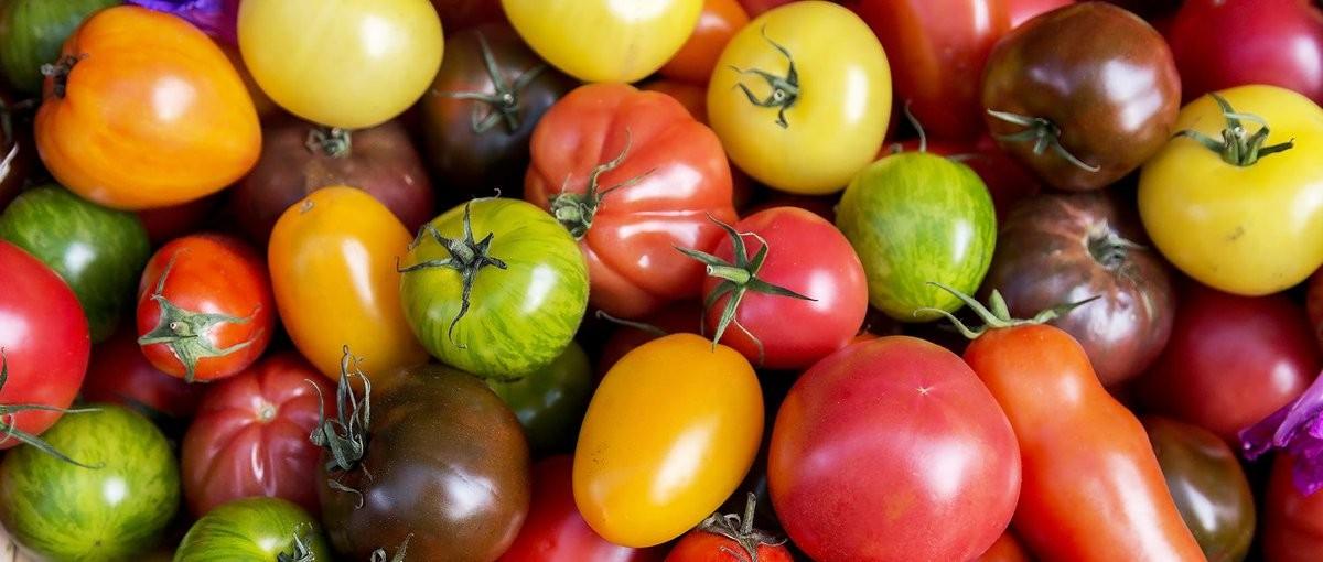 多样性,乃地球不可或缺之调味品
