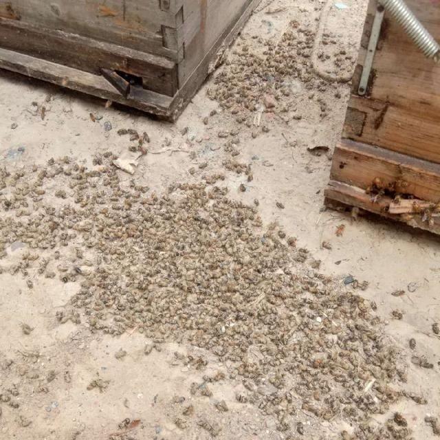 """绿会致函建议桐柏县举办""""中华蜜蜂保护与农药防治综合"""