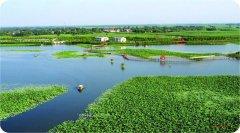 芦苇资源化利用 保护白洋淀湿地生态