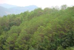 国家林草局对破坏森林资源问题严重的