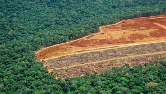 CDP报告|被忽略的投资风险:毁林风险对中国金融机构的