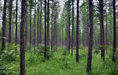 湖北长江防护林将新增20万亩造林