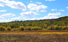 江西抚州五级林长护林强化源头监管