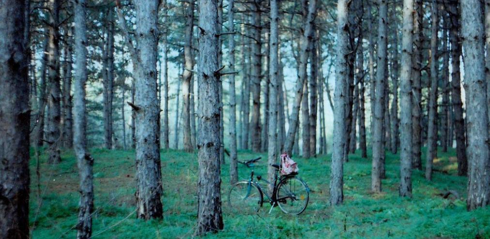 从虚拟树苗到真实造林:指尖上的绿色行动