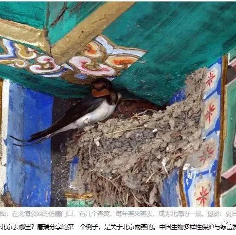 周晋峰出席北京雨燕生态研究与文化保护论坛