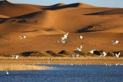 中卫阿拉善盟武威建立腾格里沙漠生态
