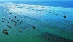"""唐山海洋牧场修复渤海生态""""海底荒漠"""