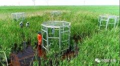 自然资源部地质调查支撑服务滨海湿地保护修复