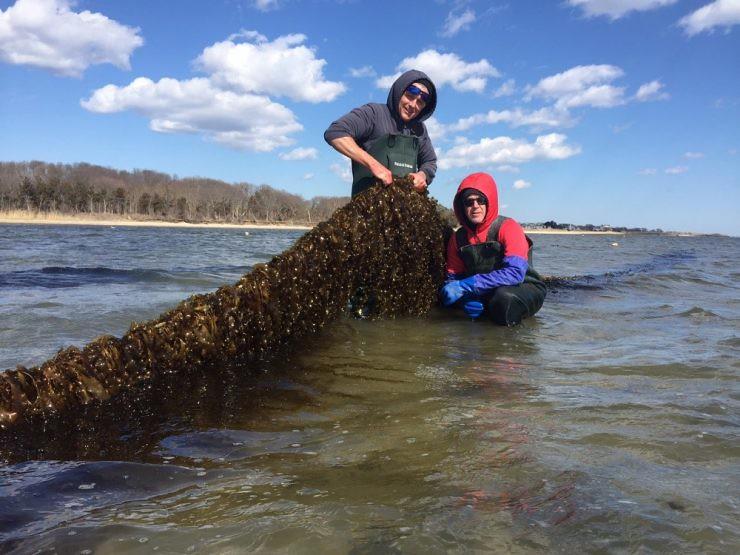海藻有望成为气候变化和植物饮食时代的新兴作物