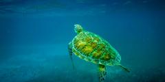 巴西石油计划威胁南大西洋生物多样性