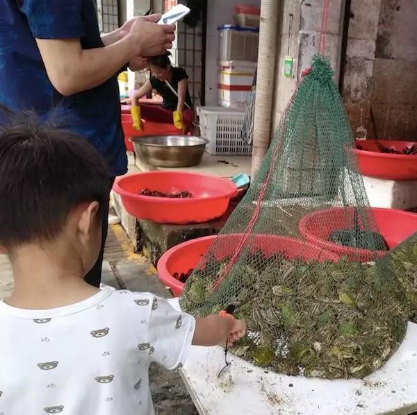 江西九江:青蛙的死亡之地,谁来拯救?