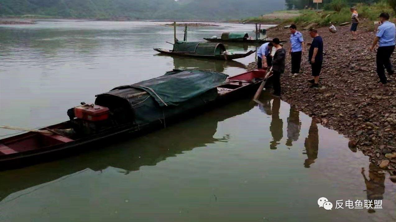 """湖南怀化:沅水特有鱼类""""国家级""""保护区电鱼,该当何"""